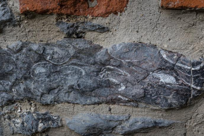 Fosílie ramenonožců ve stěně pece Františka